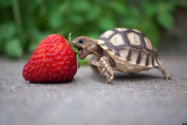 Turtle and Raspberry